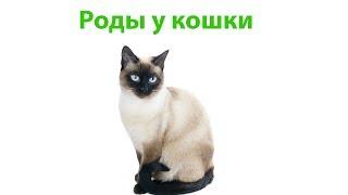 Роды У Кошки & Помощь Кошке При Родах. Ветклиника Био-Вет