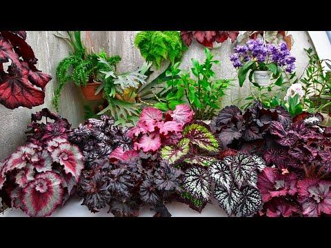 Вопрос: Какие есть сорта роз с глянцевыми блестящими листьями?