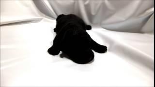 ミックス犬専門店 http://aidol-doggy.com/mix/ ブリーダーの子犬販売ア...