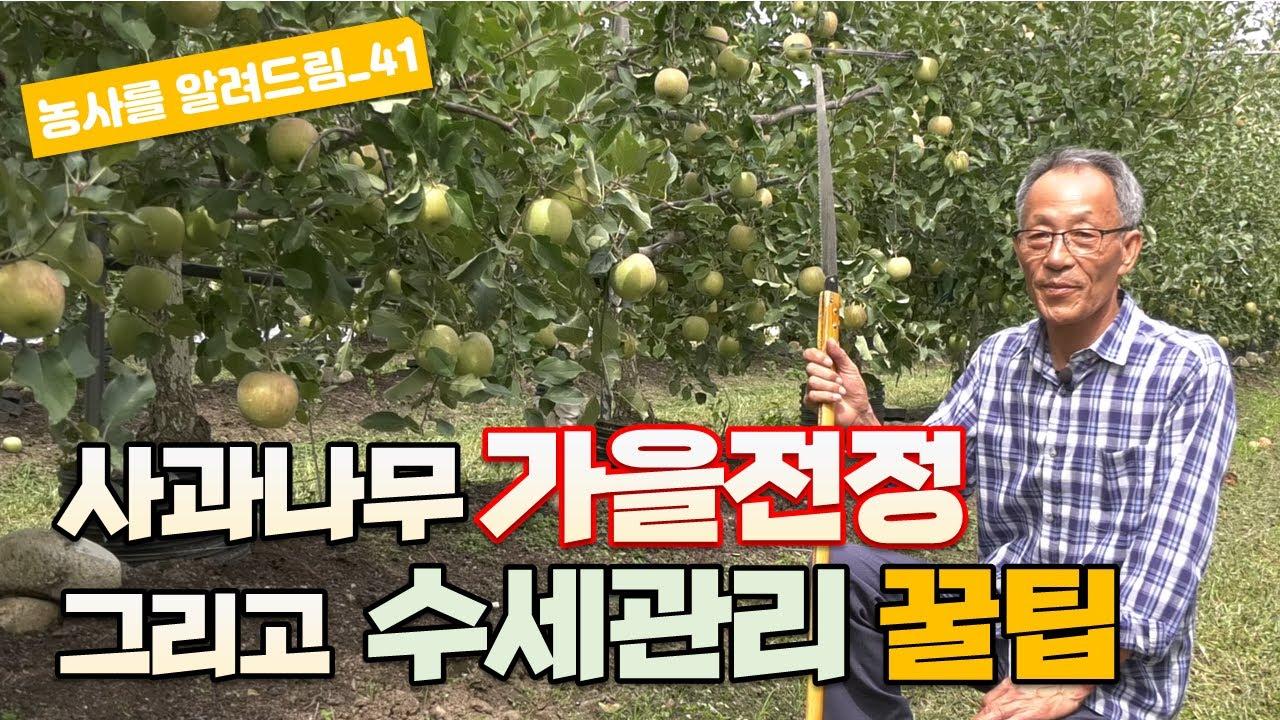 사과 가을전정 수확 후 수세 관리 꿀팁 유병욱강사