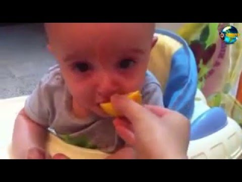 Funny Dogs And Babies Eating Lemons for the First Time Compilation