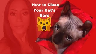 How to Clean Your Cat's Ears (Sphynx)
