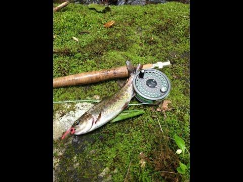 Wild Rainbow Trout Fishing North Carolina 2014