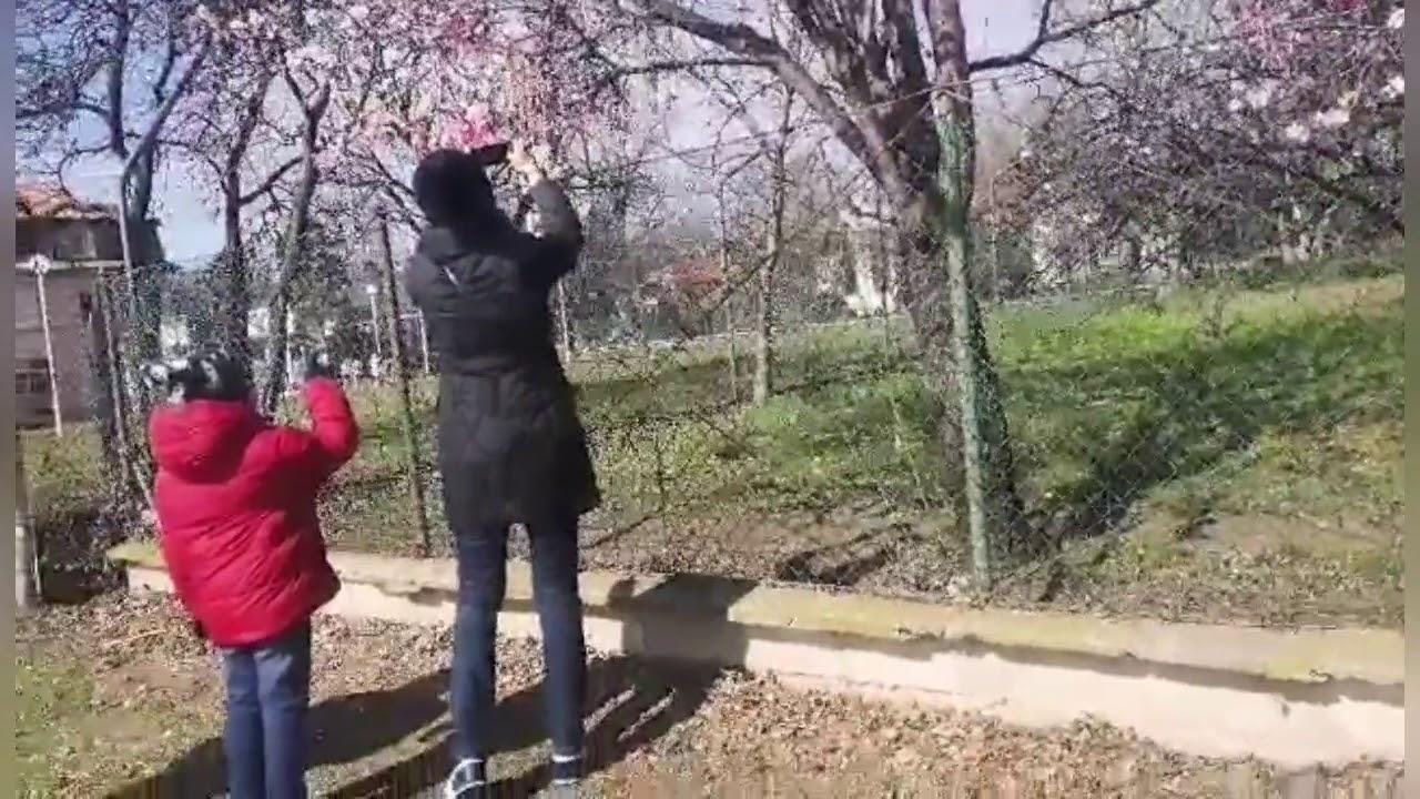 vlog Весна в Болгарии. Миндаль цветет. Первые весенние цветы.