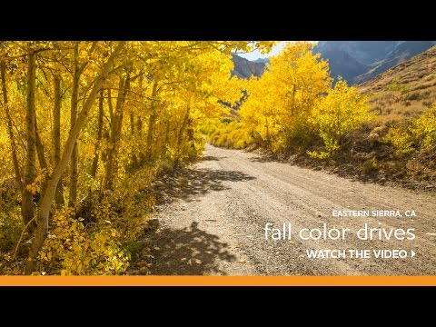 Fall Colors | VisitMammoth.com (Official Visitor Information) on west virginia fall colors map, california fall flowers, california autumn leaves, california colors com, california fall foliage, japan fall colors map, california foliage report, california ground fall, wi fall colors map, california fall colrs, june lake loop map, california decline, iowa fall colors map,