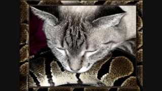 Amazing Love Story Between Abused Cat And My Snakes