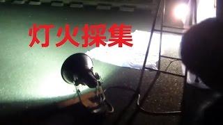 灯火採集でクワガタを採ってみました。紫外線が大好きな虫の習性を利用...