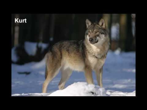 çocuklar için hayvanlar alemi sesli hayvanları tanıyalım 1