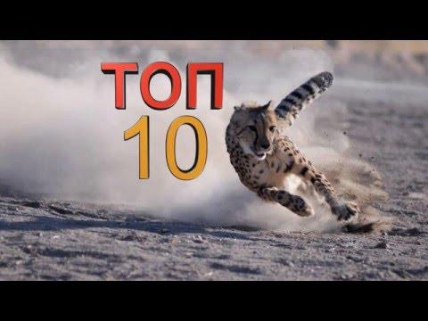 Топ 10 самых быстрых животных планеты