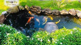 Hồ cá Koi đẹp - Hồ cá Koi mini ngoài trời | Lọc đơn giản, nước trong như suối | Beautiful koi ponds