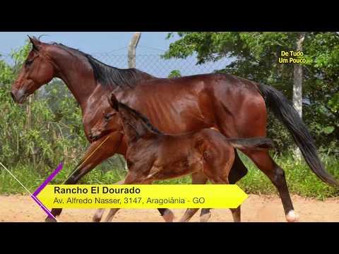 Programa de Tudo um Pouco 333 - Modalidade Três Tambores Rancho Eldorado