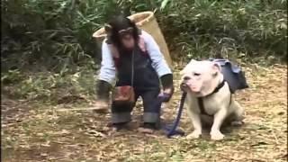 Phim | Chó và khỉ thông minh ở nhật bản 3 | Cho va khi thong minh o nhat ban 3
