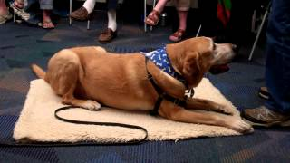 Pvsc Canine Good Citizen Presentation