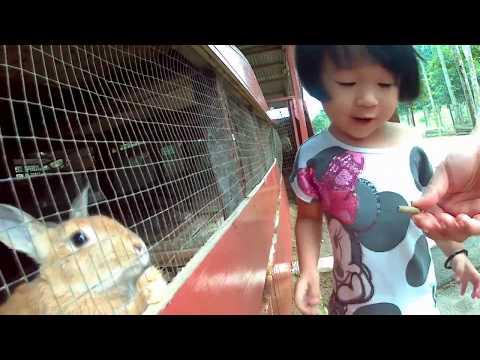 Rabbit Farm Bukit Tinggi