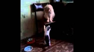 Играют ) Котенка отдам в Хорошие руки! Ищут дом