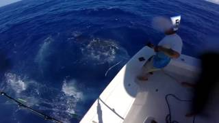 2017 Bermuda Big Game | Team Reel Addiction | Blue Marlin