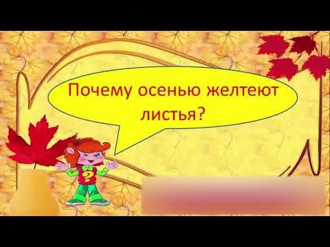 Вопрос: Почему осенью листья на деревьях приобретают разные цвета?