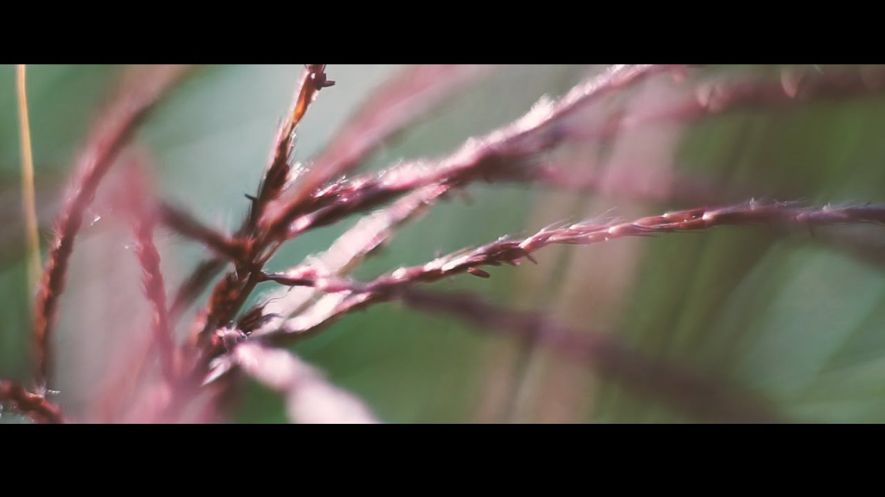 youtube how to take macro video with sony fd rax100e