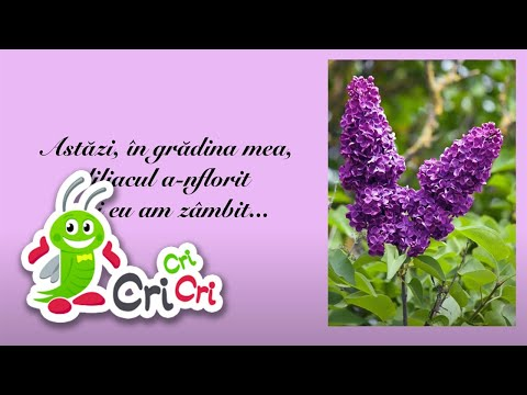 Flori de primavara (imagini) - Cantece pentru copii - CriCriCri