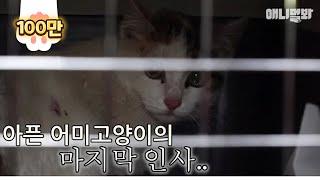 """""""고양이들은 죽을때 되면 편한 곳, 구석진데 가서 죽거든요.."""" ㅣ The Last Moments Of A Mother Cat With Broken Hind Legs.."""