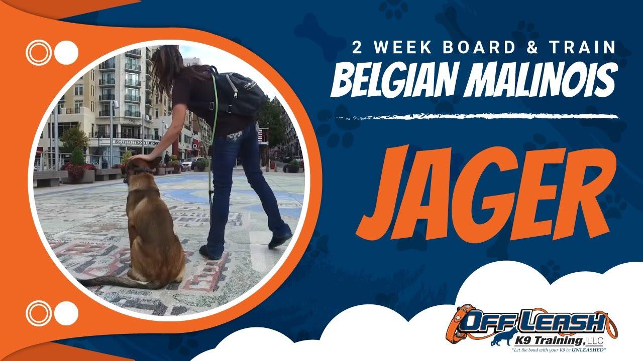 Belgian Malinois, Jager | Belgian Malinois Dog Training ...