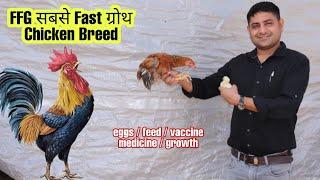 सबसे fast growth वाली देसी मुर्गी पालन   FFG CHICKEN BREED   KUROILOR CHICKEN   Poultry Farming