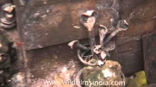 Mahakala Temple in Bhubaneswar, Odisha
