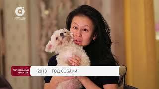 2018 - год собаки. Специальный репортаж (31.12.2017)
