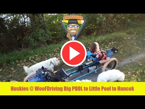 Adventures with my husky dogs WooFDriving Big POOL to Little Pool to Hancok