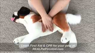 Pet First Aid & Cpr Class Training: Apcpr™, Modern Bls Techniques To Save Canines And Felines