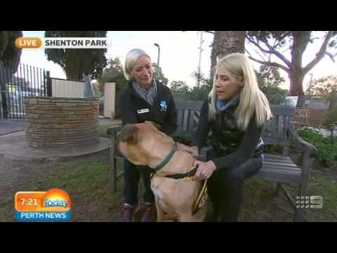 Dogs Refuge Home Shenton Park - Part 1 | Today Perth News