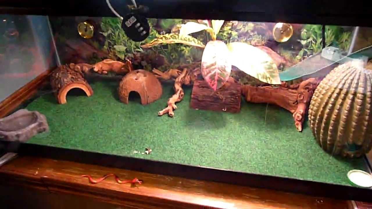 PetStore Employees Leopard Gecko Setup YouTube