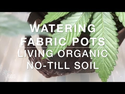 WATERING CANNABIS IN SMART POTS: Living Organic No-Till Soil