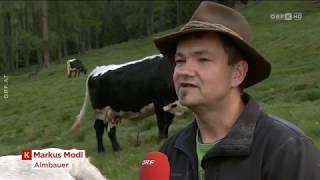 Zukunft der Almwirtschaft ORF Kärnten heute