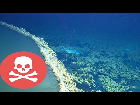 Hồ Dưới Lòng Đại Dương Giết Bất Kỳ Thứ Gì Lạc Vào Trong Đó   Khoa Học Huyền Bí