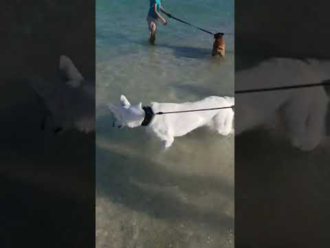 Luna en las playas de Miami. - 동영상