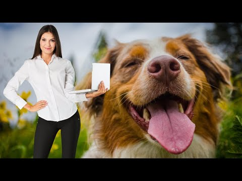 The Most Important Thing For Dog Daycare Business Owners To Know