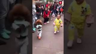 Собака ходит как ребёнок