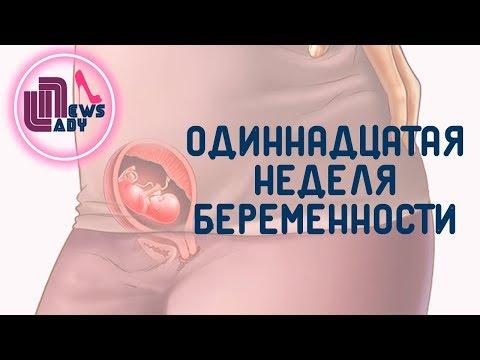 11 Одиннадцатая неделя беременности  Как развивается плод