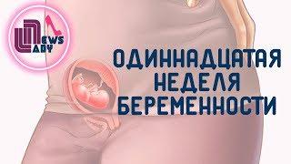 видео 11 Неделя беременности что происходит