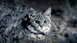 The World's Deadliest Cat