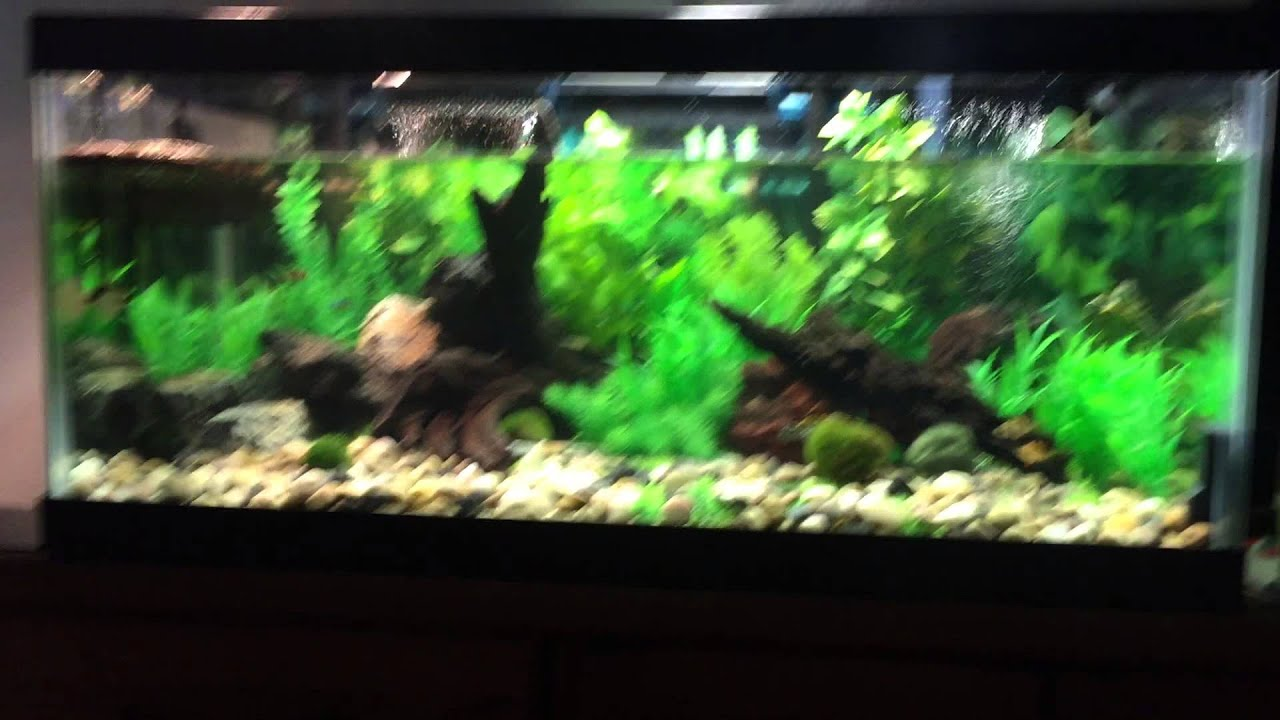 Turtle and fish tank youtube for Fish tank turtles
