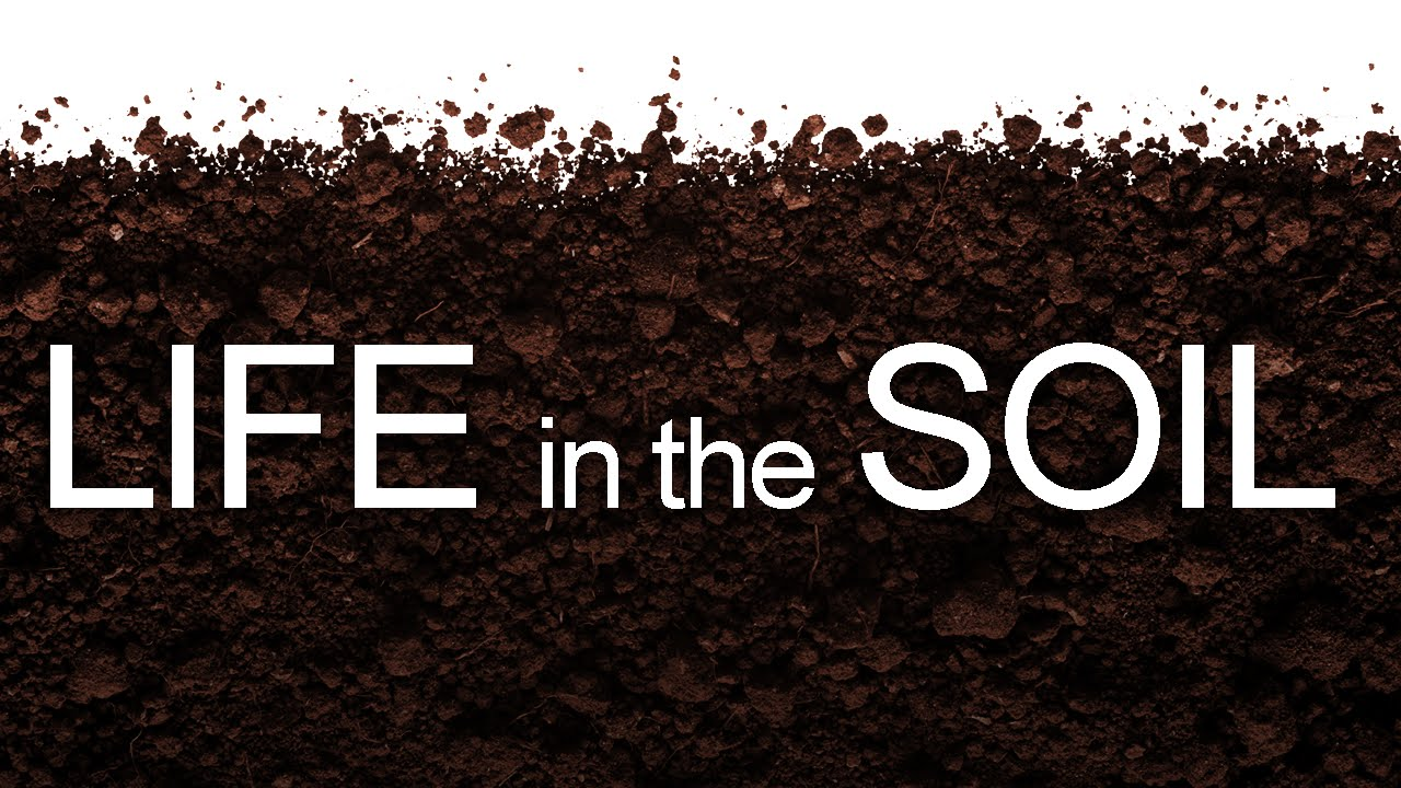 Life in the soil youtube for Things in soil
