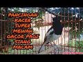 Pancingan Kacer Super Mewah Gacor Ngeplong Pagi Siang Malam  Mp3 - Mp4 Download