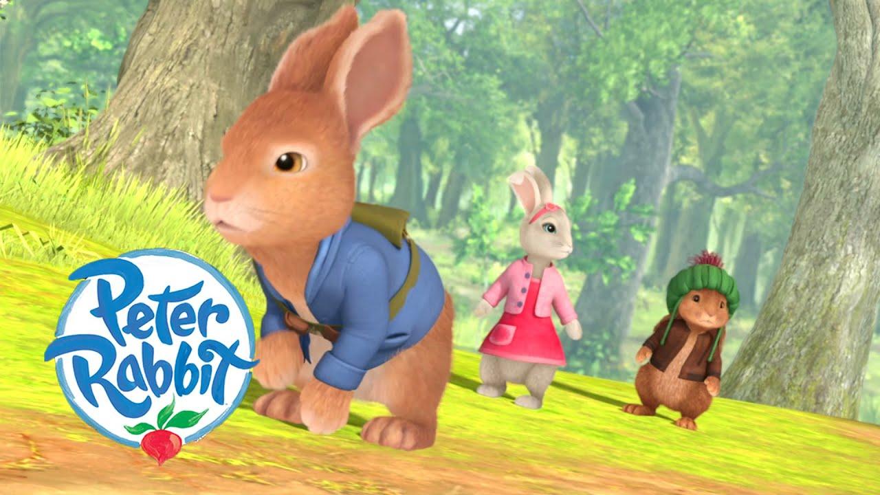 Peter Rabbit - Find Somewhere to Hide   Summer Adventures   Cartoons for Kids