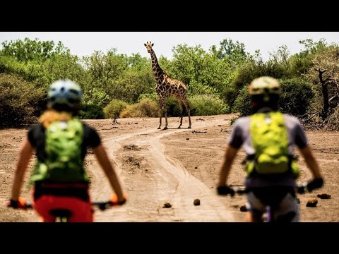 Botswana MTB Safari: Spotting African Wildlife by Bike