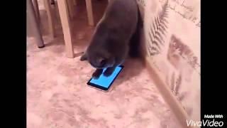 Кот играет в планшет.