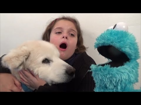 Thumbnail: Cookie Monster Attacks Girl Feeds Pet Dog Cookies