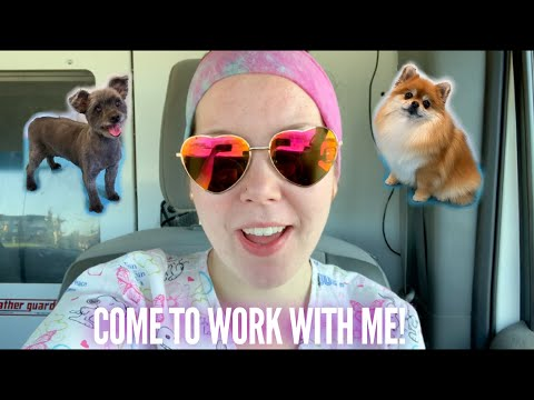 Day In The Life of a Mobile Dog Groomer! | Mobile Pet Grooming