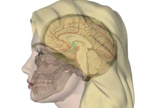 Basisinformationen über Hypothalamus und Hypophyse - YouTube